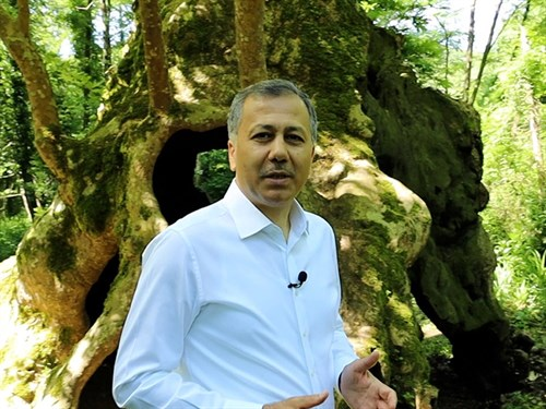 Governor Yerlikaya Visited Istanbul's Oldest Tree on the World Environment Day